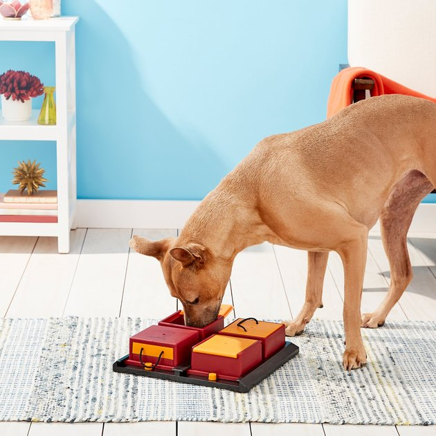 dog plays with enrichment puzzle feeding box