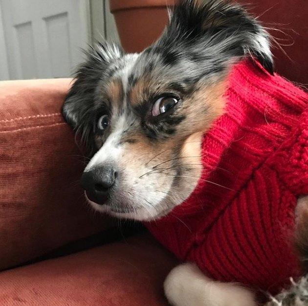 dog in red turtleneck