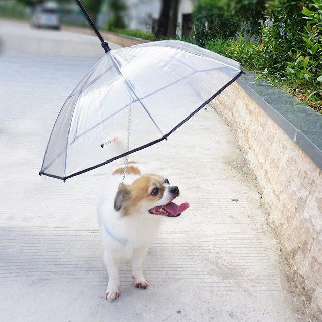 dog walks on leash with built-in umbrella