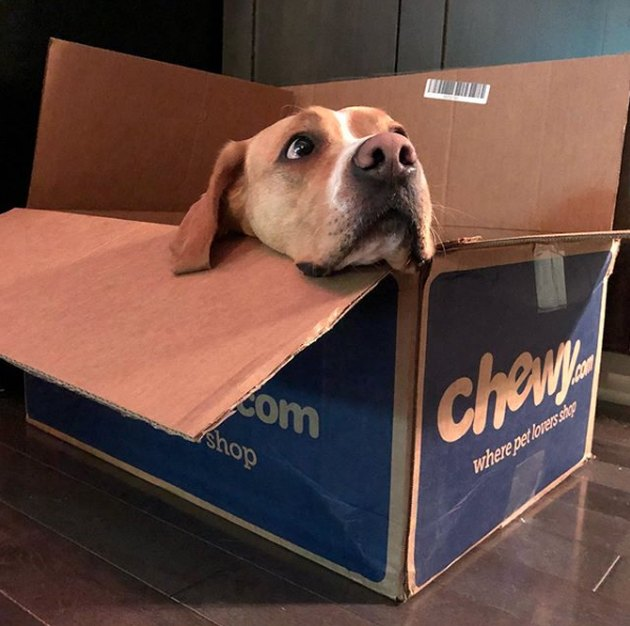 dog in chewy box