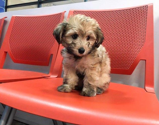 puppy sitting on orange chair in vet waiting room