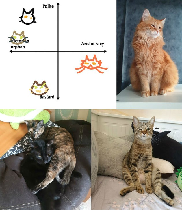 humans charts cats on personality chart