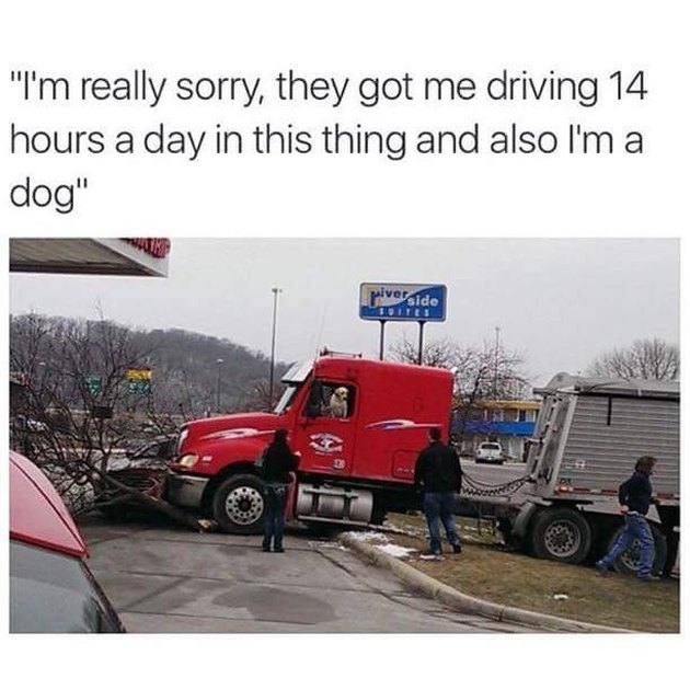 Dog in a crashed semi truck.
