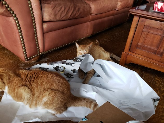 kittehs playing with wrapping paper
