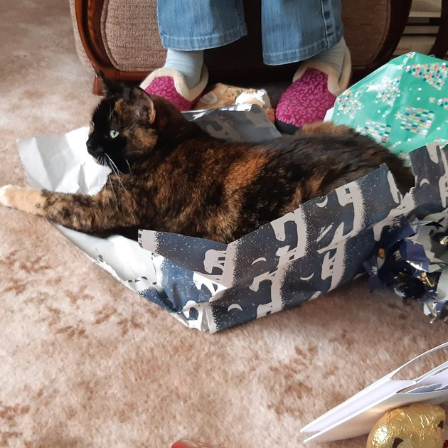 cat loves wrapping paper