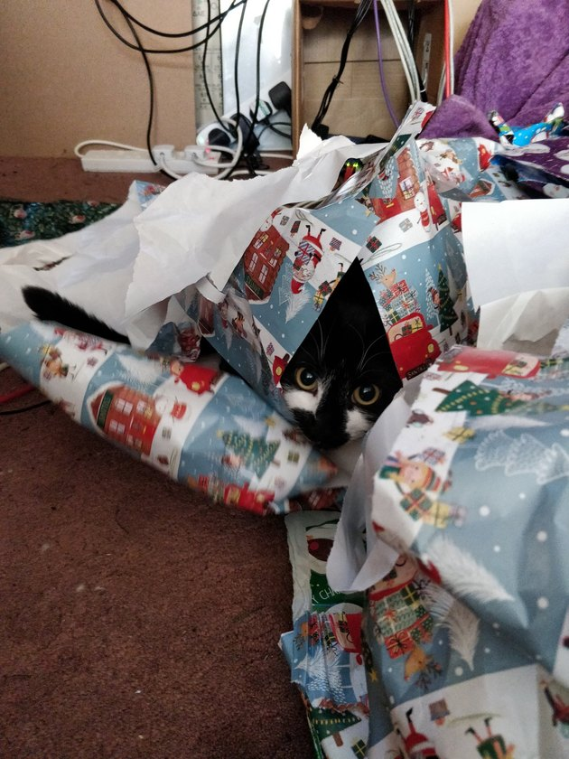 cat lies in wait in pile of wrapping paper