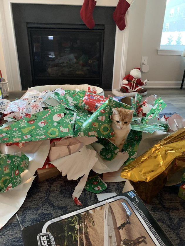 cat playing in christmas wrapping paper