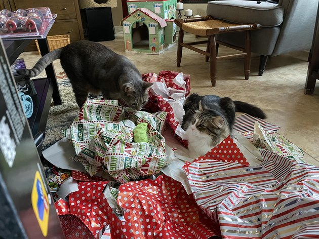 cats play with discarded wrapping paper