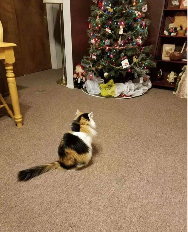 Christmas tree ringed with plastic bags to prevent cat from climbing it