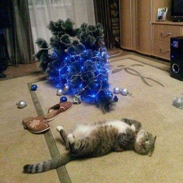 cat rolls on carpet next to fallen Christmas tree