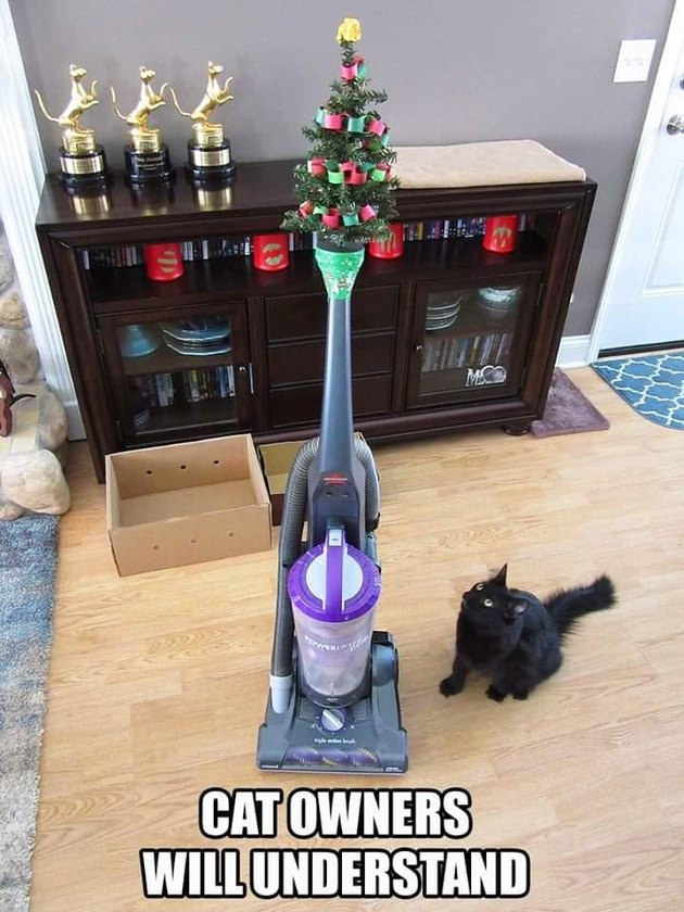 black cat tempted by mini Christmas tree on top of vacuum cleaner