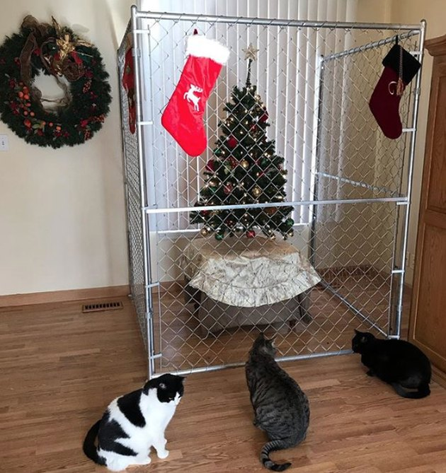 Christmas tree hidden behind chain link fence to safeguard it from cats