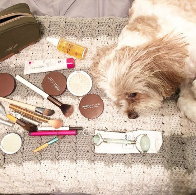 dog surrounded by makeup