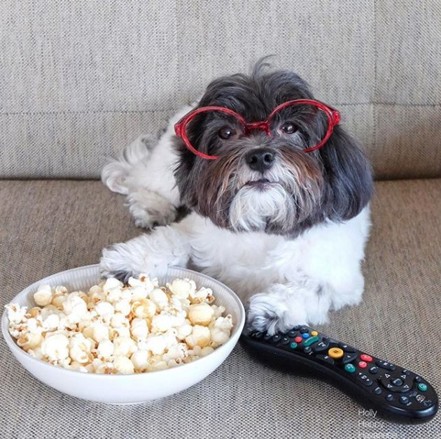 dog with remote and popcorn