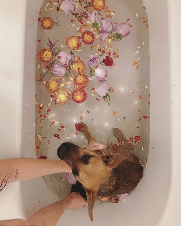 dog in bath with flowers