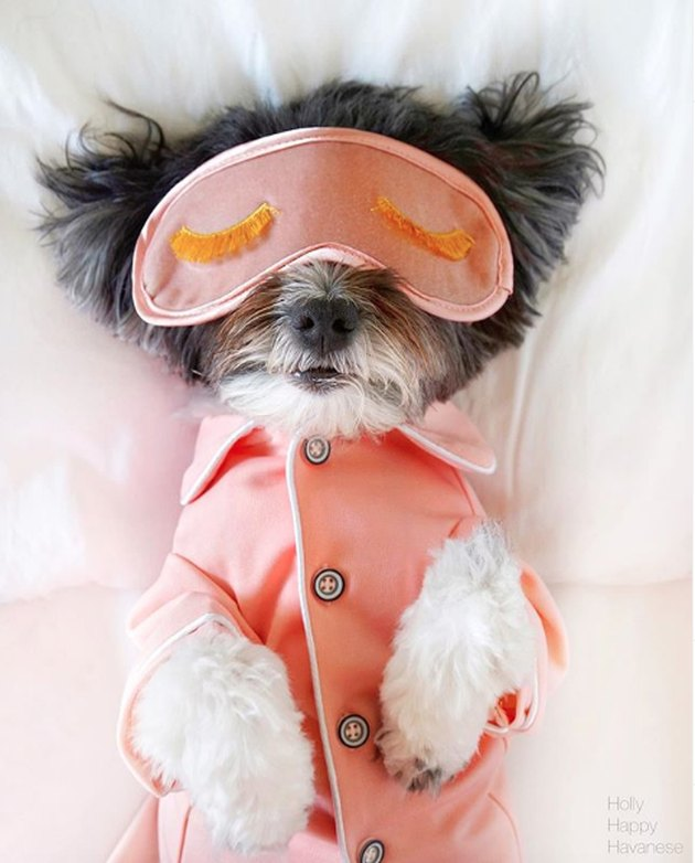 dog in bed with sleep mask