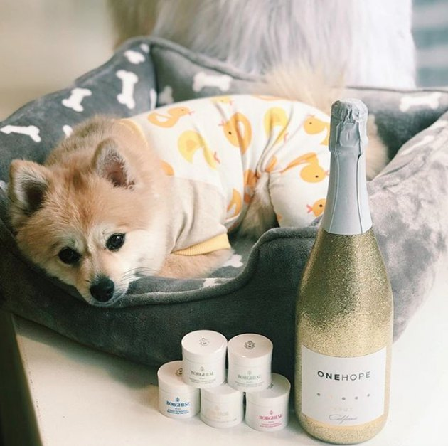dog with champagne