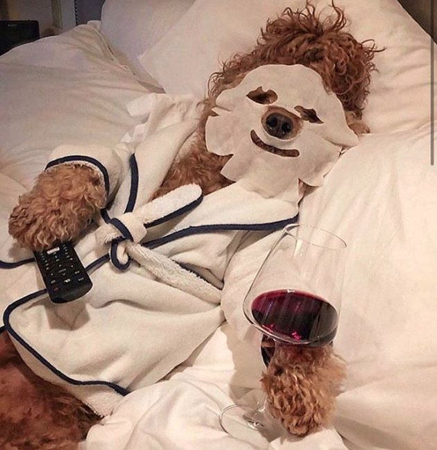 dog with face mask, remote, robe, and glass of wine