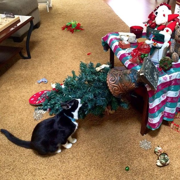 cat drags small Christmas tree to ground