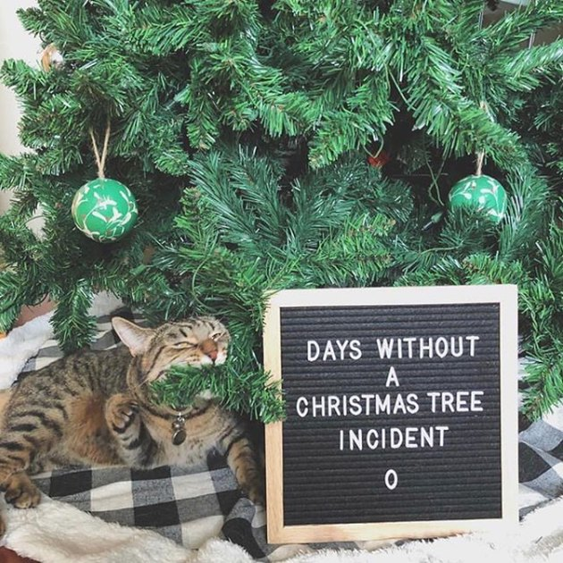 cat nibbles on Christmas tree