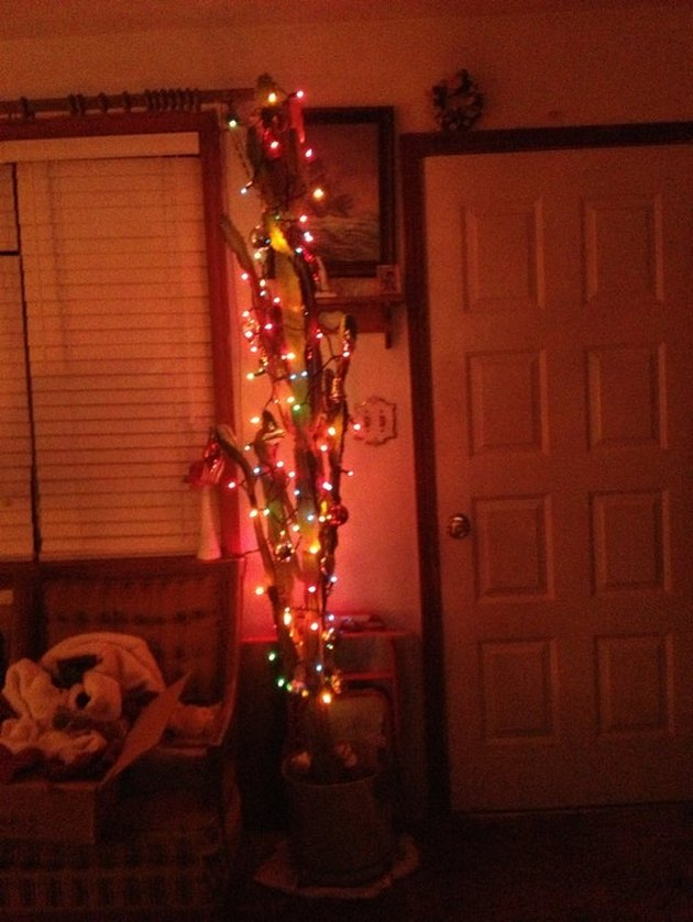 Christmas tree replaced with Christmas cactus to safeguard it from cats
