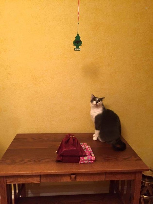 Christmas tree replaced with little tree car freshener to prevent cat from attacking it