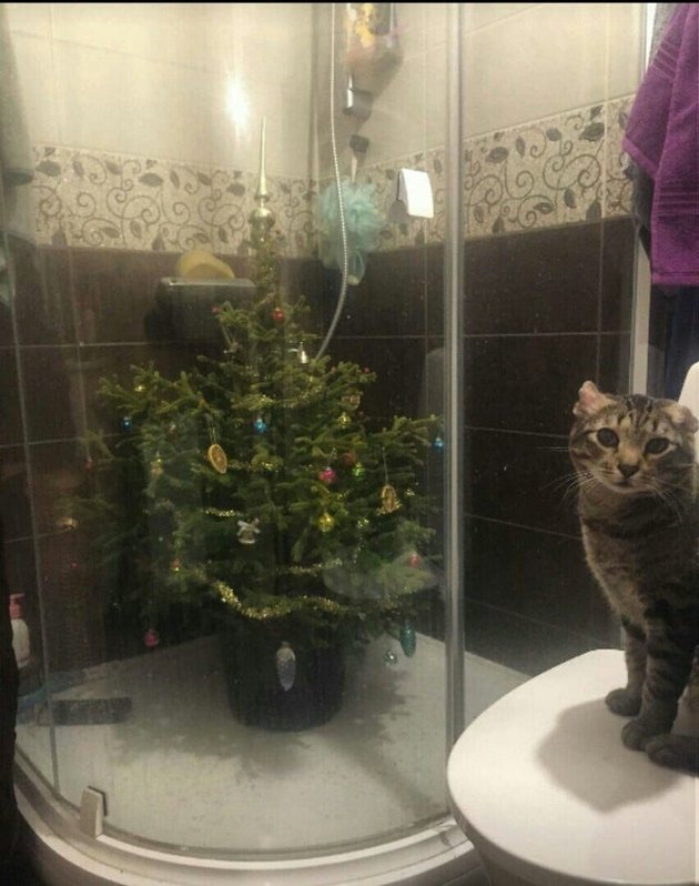 homeowner places Christmas tree in shower to protect it from cat