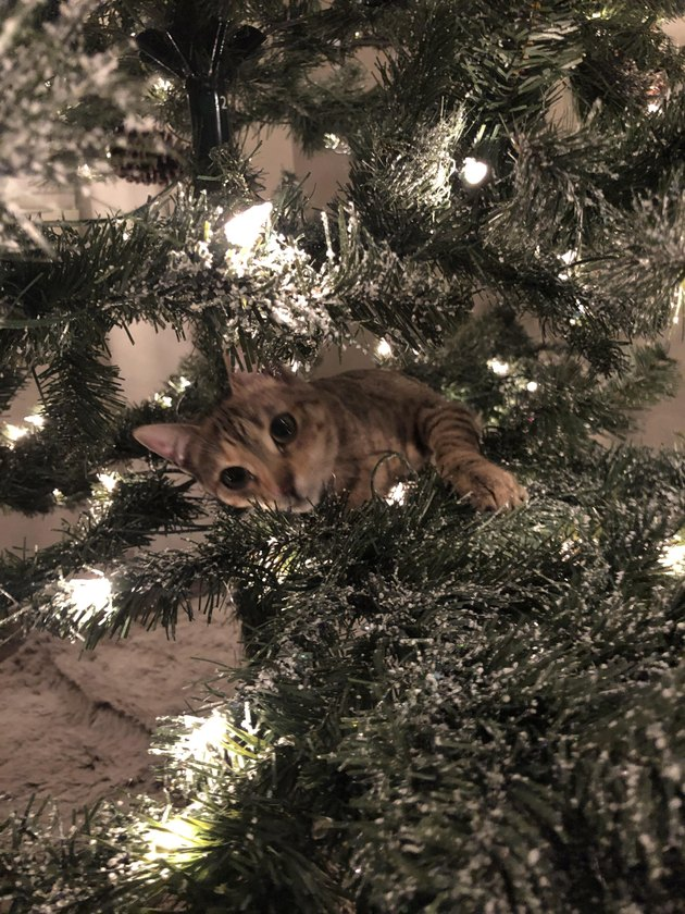 cat owner screws Christmas tree to floor to prevent cat from tipping it over