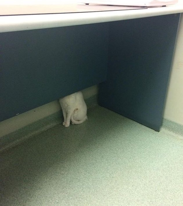 cat hides behind desk at veterinarian's office