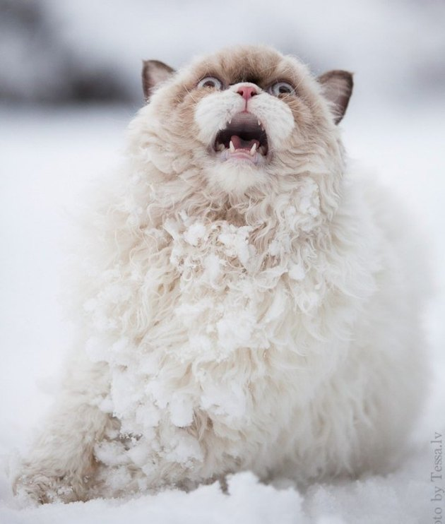 Surprised cat in snow.