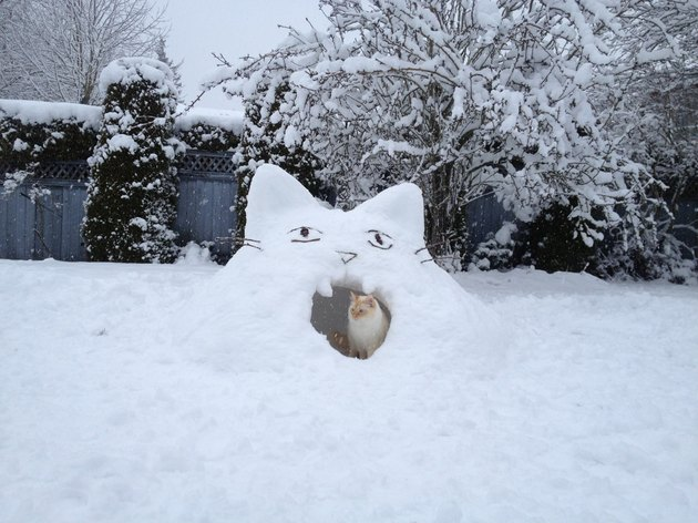 Cat sitting in a cat-shaped snow fort.