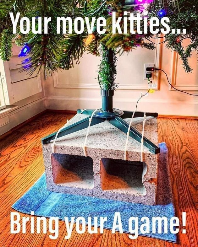 Cats vs Christmas trees