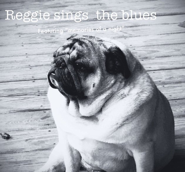 If pets had album covers