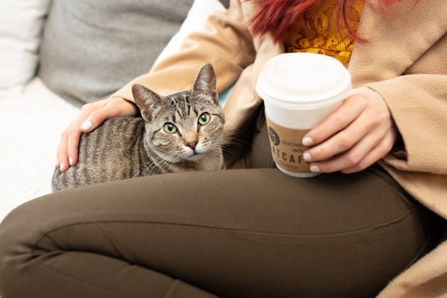 Cat bonds with CatCafe Lounge guest.
