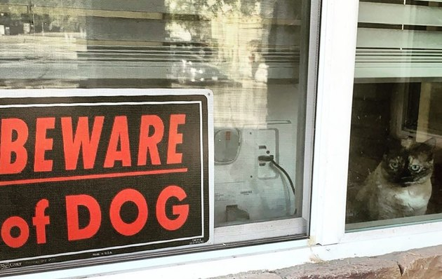 Cat sitting in window next to Beware of Dog sign