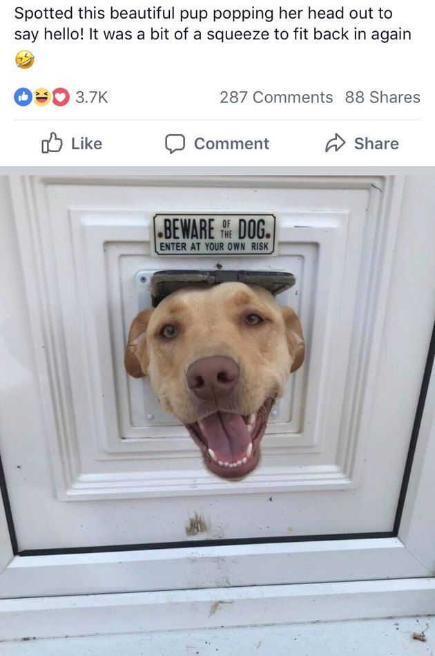 Dog sticking its head through cat door underneath Beware of Dog sign