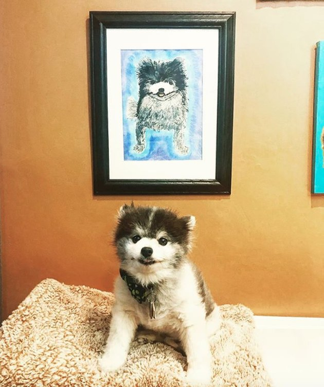pomeranian next to its custom portrait