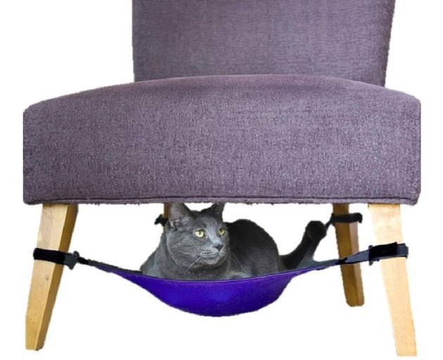 cat sits in pet-sized chair hammock