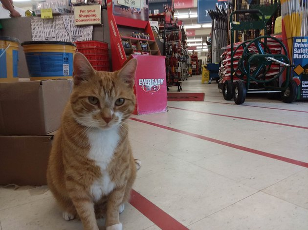 Cat in a hardware store