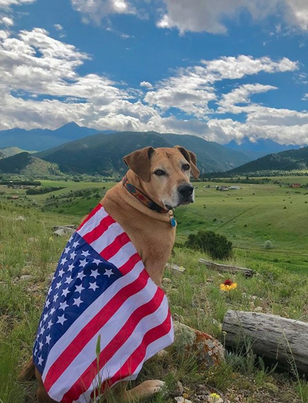 dog draped in American flag