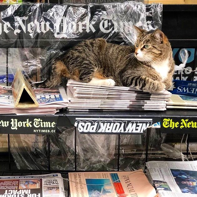 Cat sitting on stack of newspapers