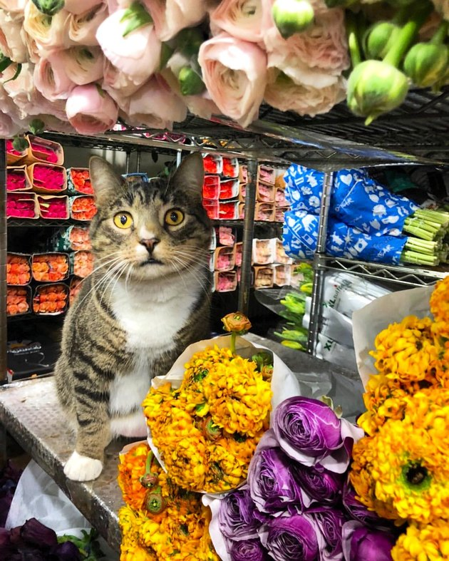 Cat on a shelf with bouquets