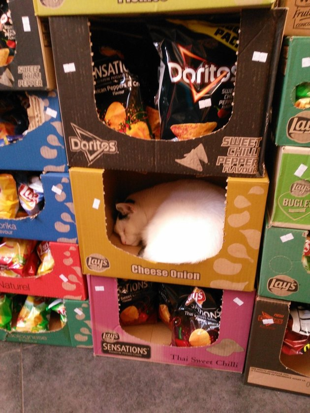 Cat in an empty box of Cheese Onion chips