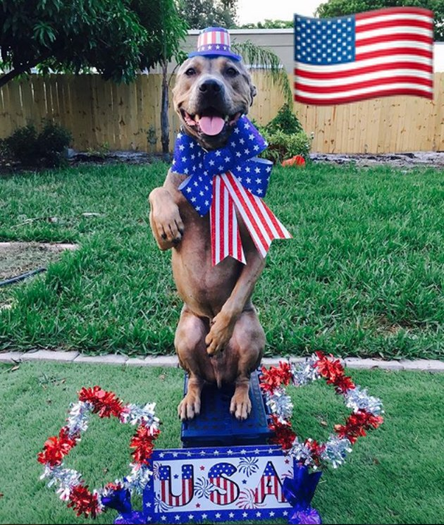 dog standing on USA platform