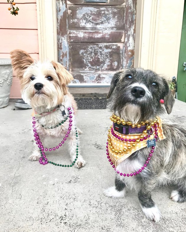 136 Cajun names for dogs
