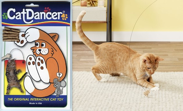 cat plays with cat dancer toy