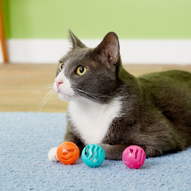 cat plays with plastic balls