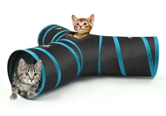 cats play in collapsible cat tunnel