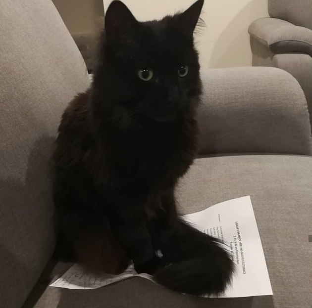 cat sits on meeting minutes