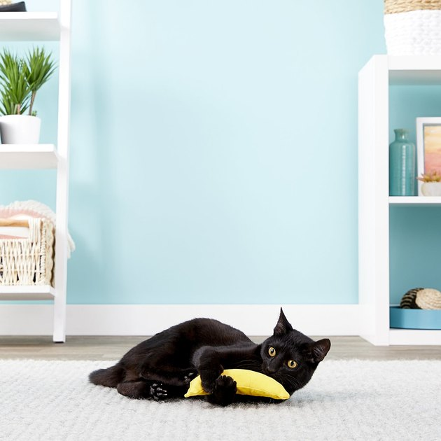 cat playing with plush banana stuffed with catnip